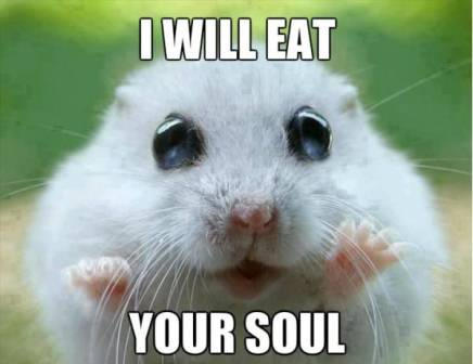 Funny-Hamster
